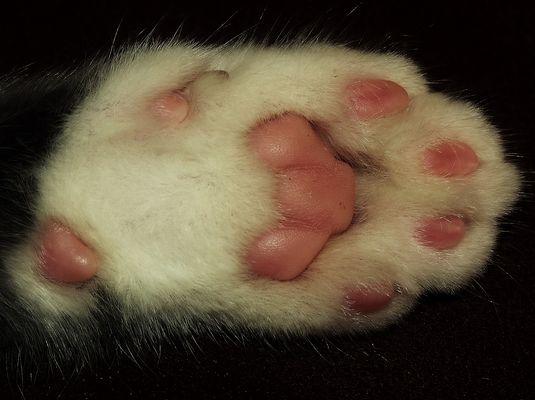 les lignes de vie.....d un chat........