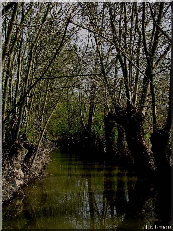 Les Marais 3