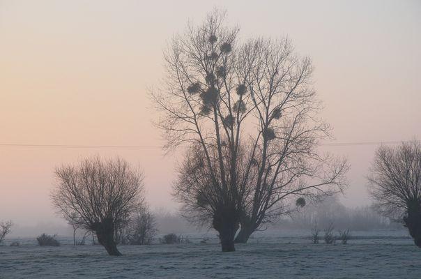 les marais de la dive Janvier 2012