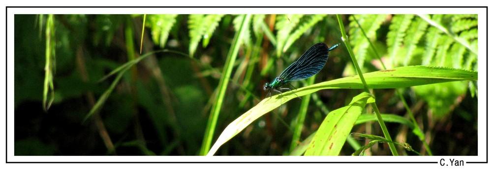 Les âmes sont les libellules de l'ombre...
