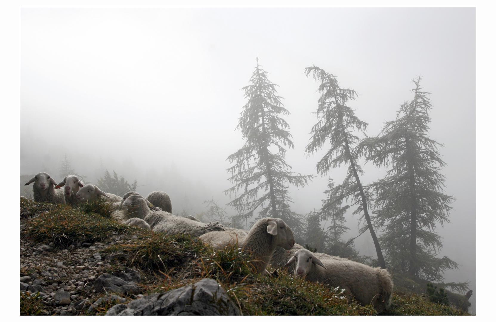 .les moutons et les trois arbres