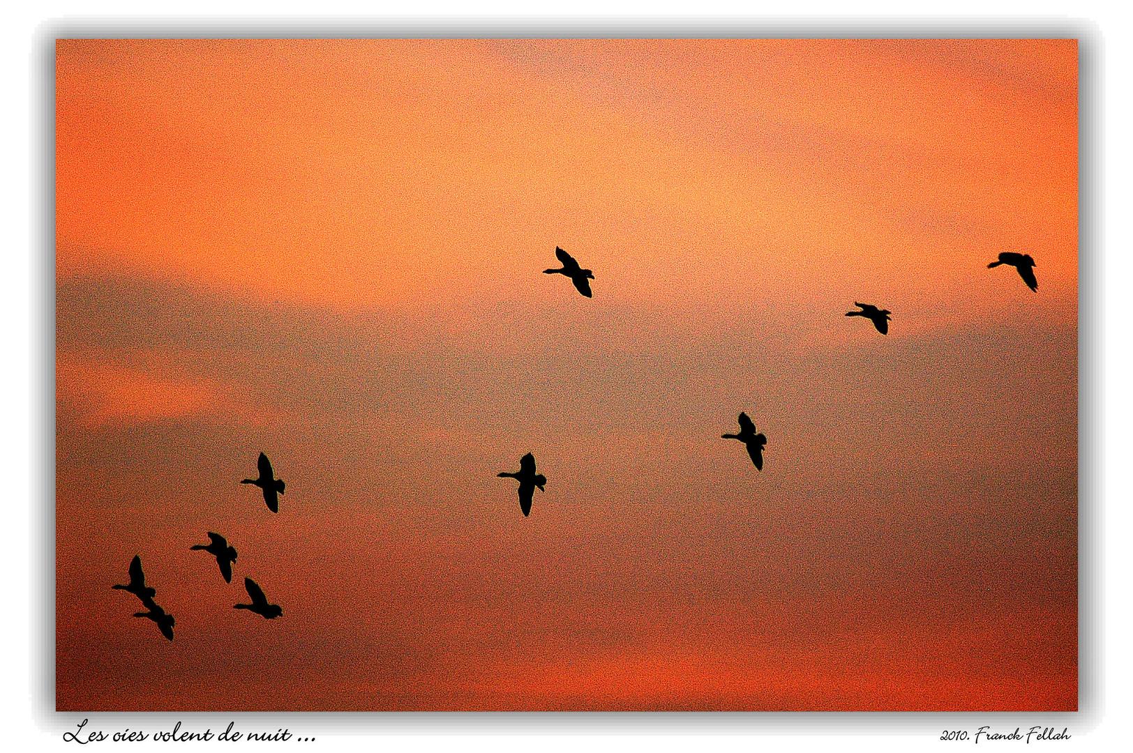 Les oies volent de nuit...