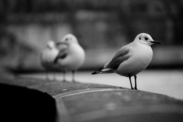 Les oiseaux 3