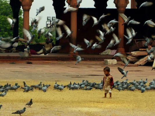 Les oiseaux et l'enfant II