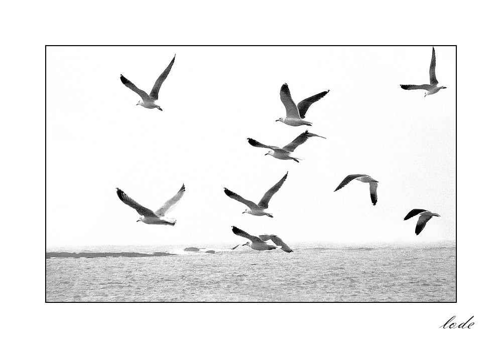 Les oiseaux ne se cachent pas pour vivre!