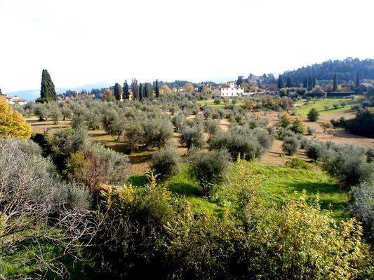 Les Oliviers de Toscane