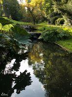les ombres sur le ruisseau