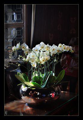 les orchidées 2