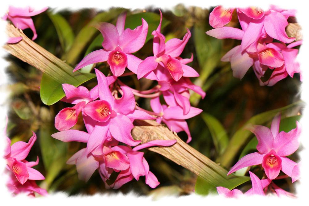 les orchidées font leur festival!