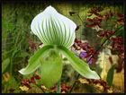 """""""Les orchidées Marcel Lecoufle"""" 2"""