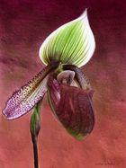 """""""Les orchidées Marcel Lecoufle"""" 4"""