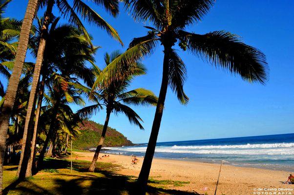 Les Palmiers de l'Océan Indien