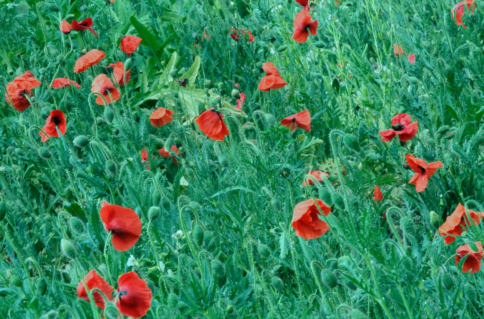 les Papillons Rouges