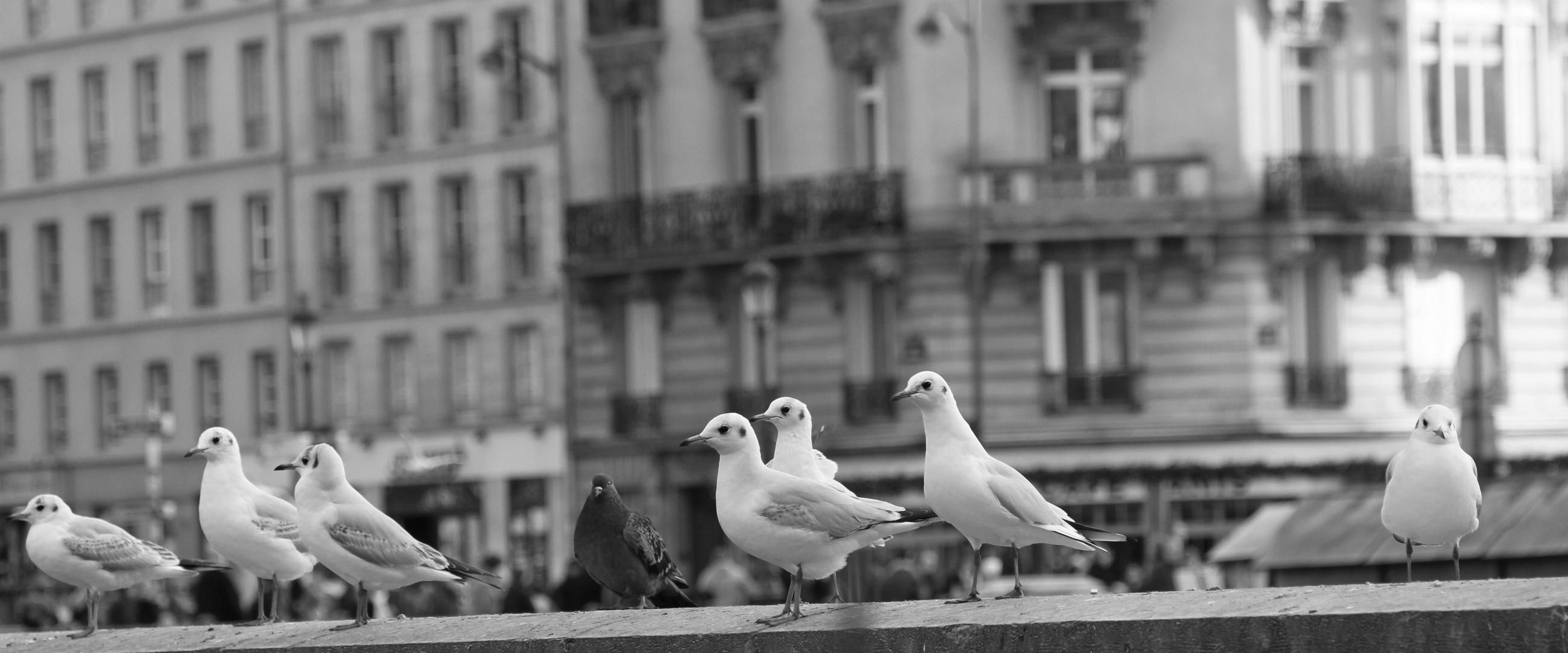Les Parisiennes !
