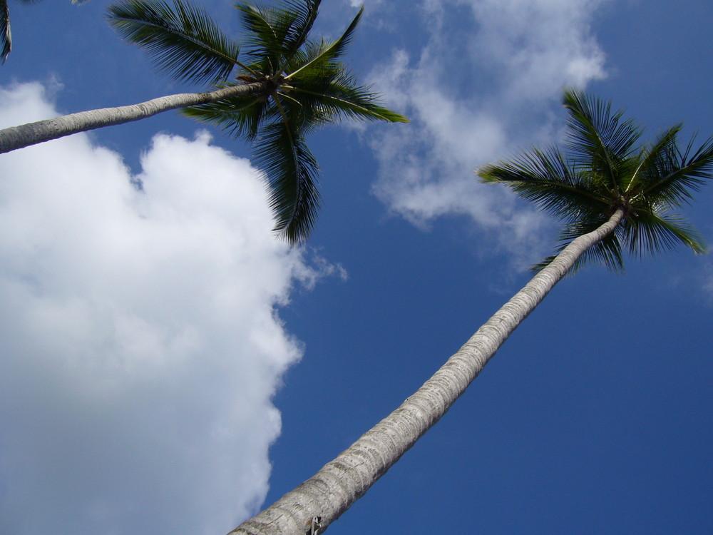 les pieds dans le sable la tête dans le ciel