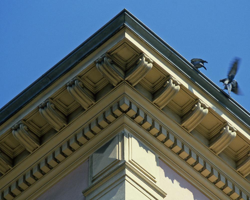 Les pigeons de Nice