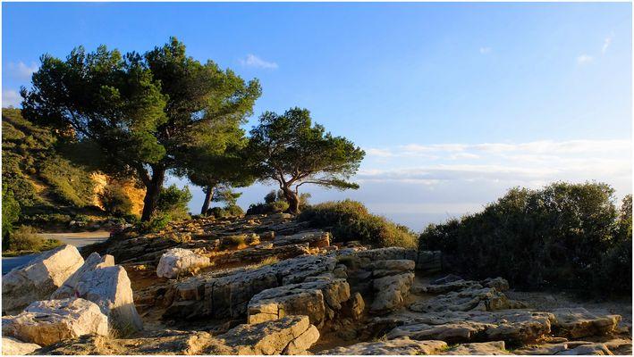 Les pins maritimes (2)