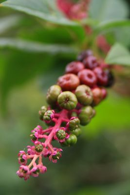 Les plantes du luberons
