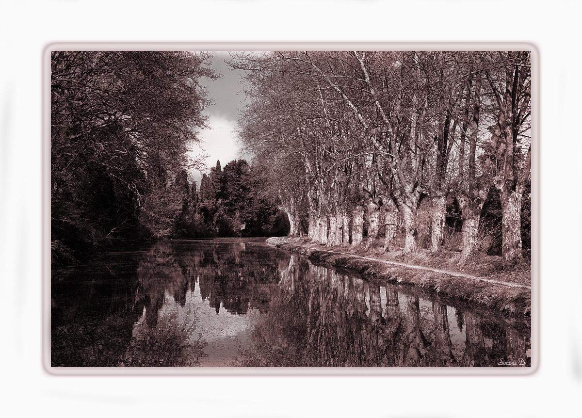 Les platanes du canal du midi .