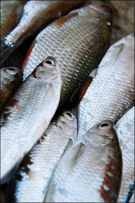 """* les poissons """""""