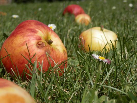 les pomme