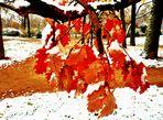 Les premiers flocons de neige
