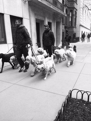 Les promeneurs de chiens - New York