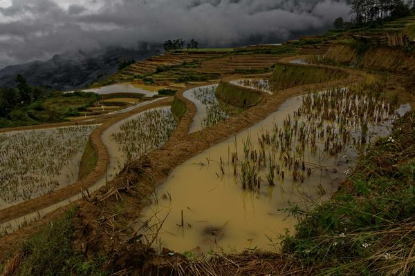 Les rivières en terrasse de Yuanyang, Yunnan, Chine.