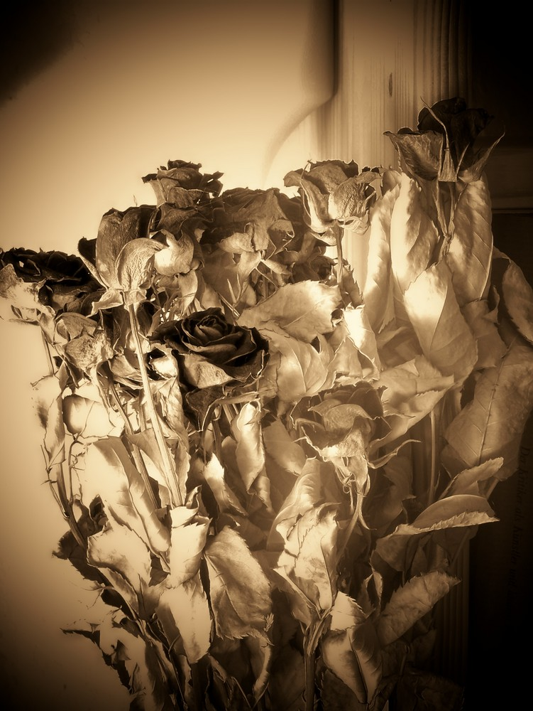 les roses vielliel