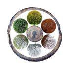 Les saisons – les cernes     - '7'
