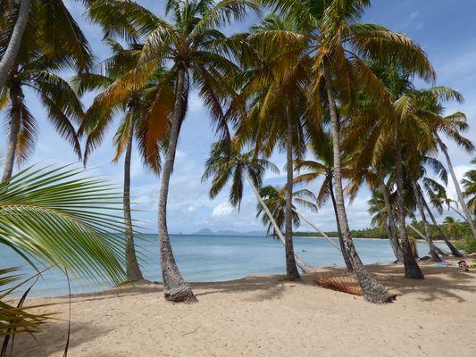 Les Salines..Martinique