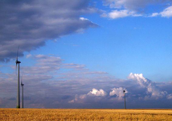 Les sentinelles des champs