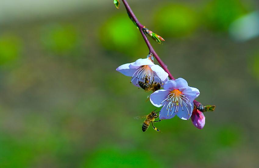 Les signes du printemps