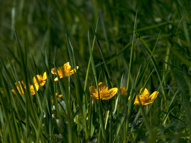 Les soleils au printemps