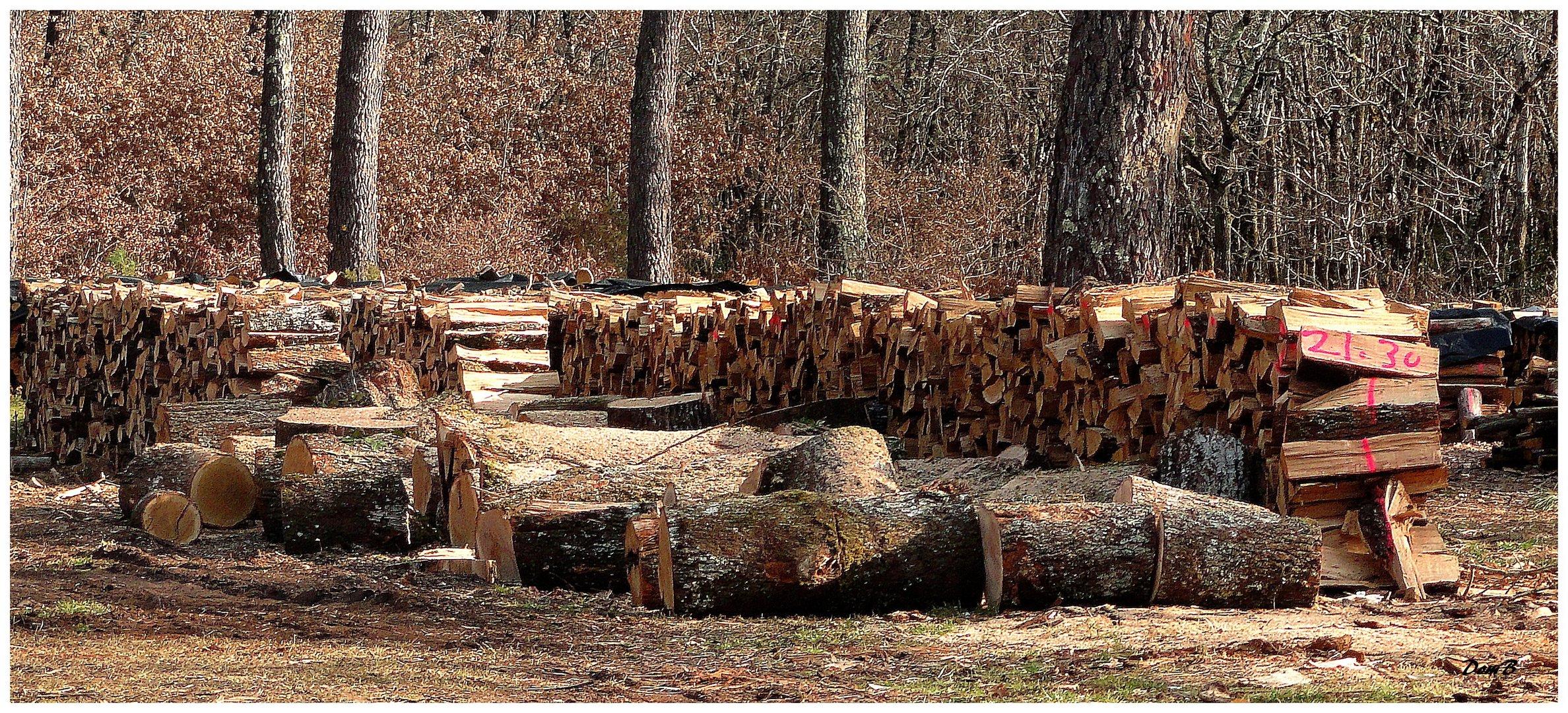 Les stères de bois qu'on achète viennent de là.