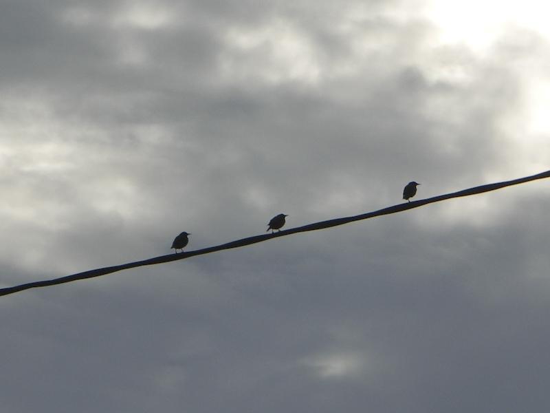 Les trois oiseaux