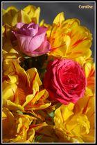 les tulipes et les roses