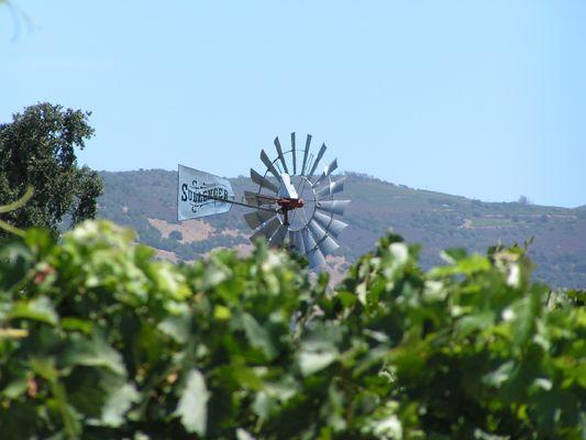 Les vignes californiennes