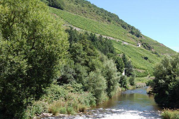 les vignes d'Alsace