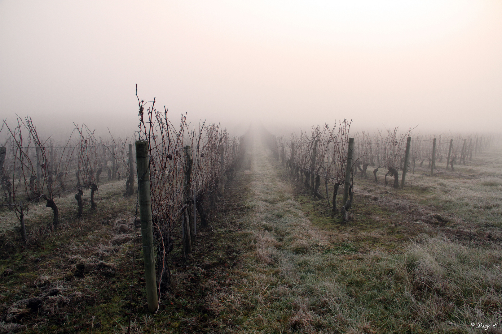 Les vignes de Buzet