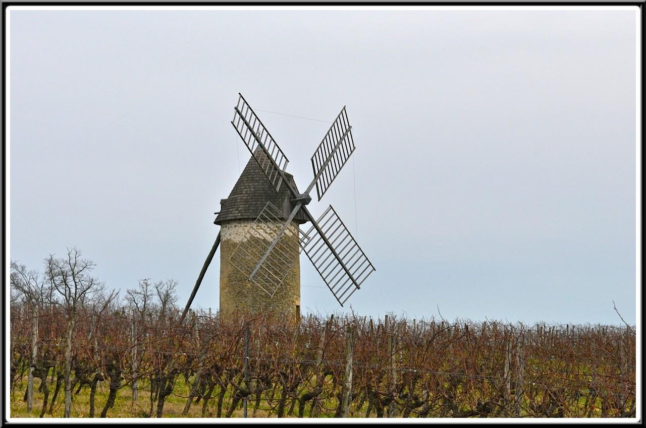 les vignes de mon moulin