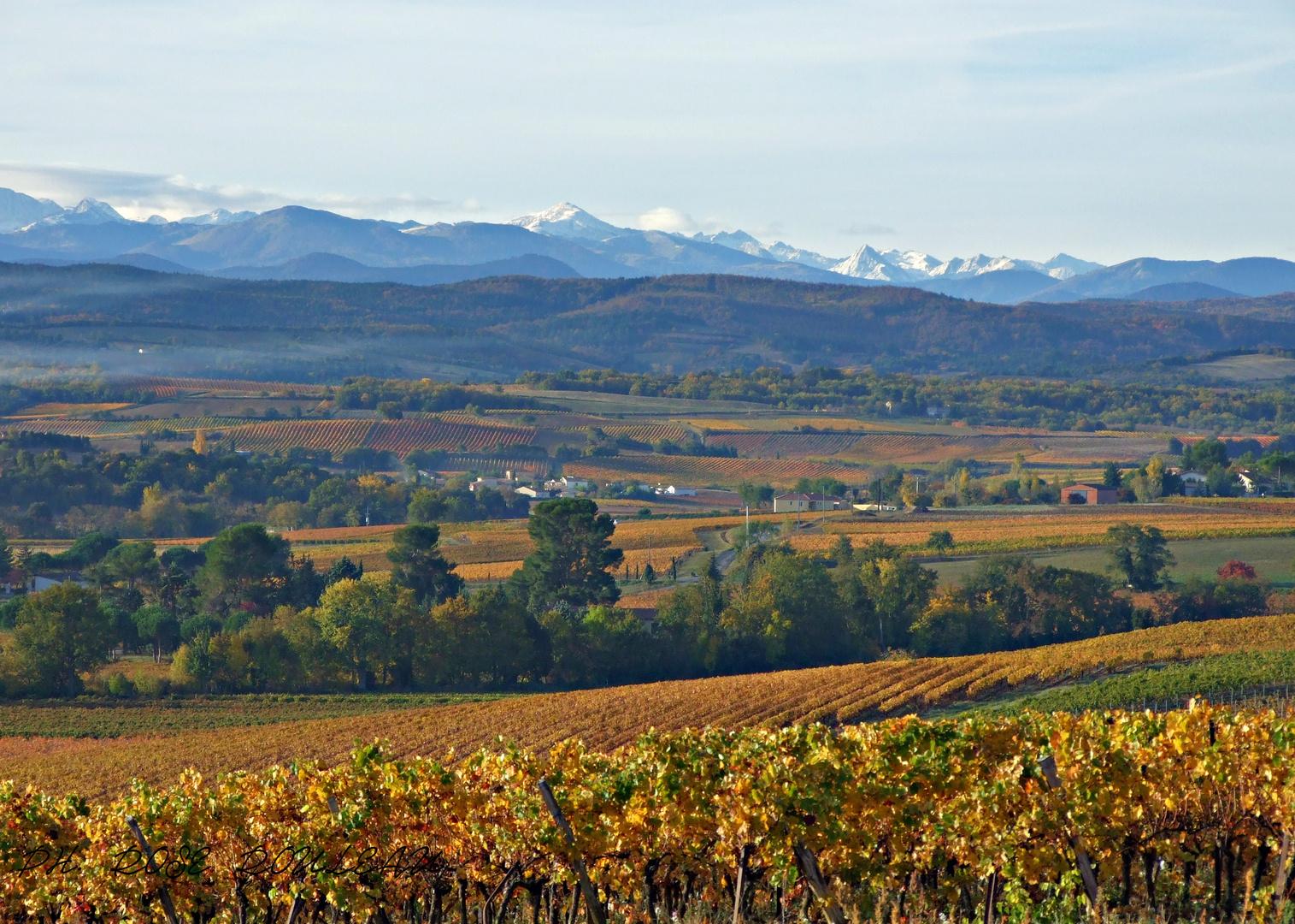 Les vignes en automne et première neige sur les pyrénées orientales