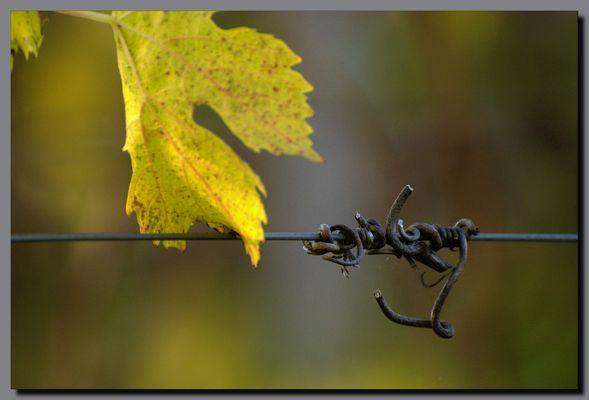 Les vignes perdues