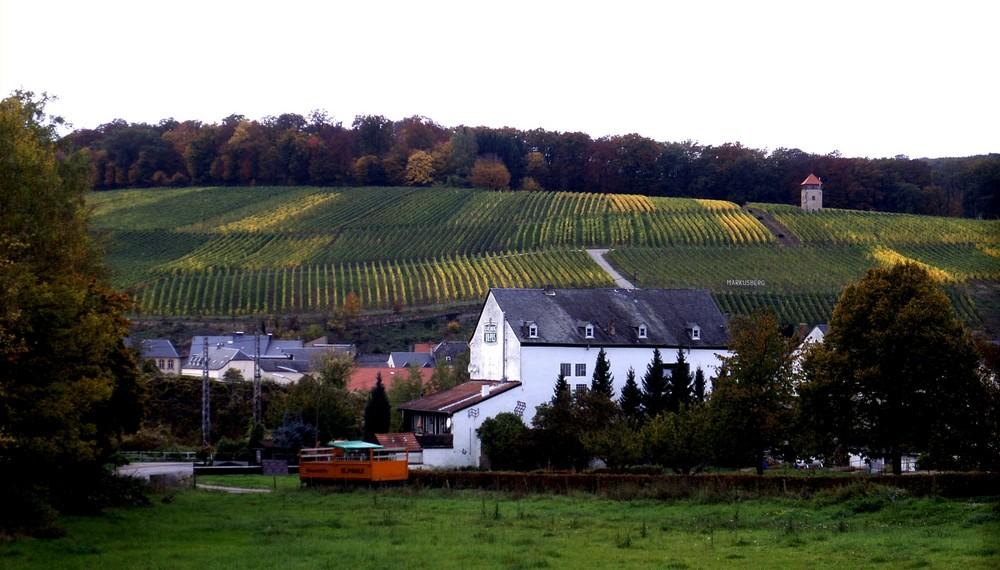 Les vignobles de Schengen