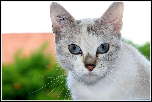 Les yeux azur