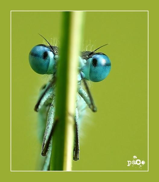 les yeux bleus... oder wer blinzelt verliert ;-)