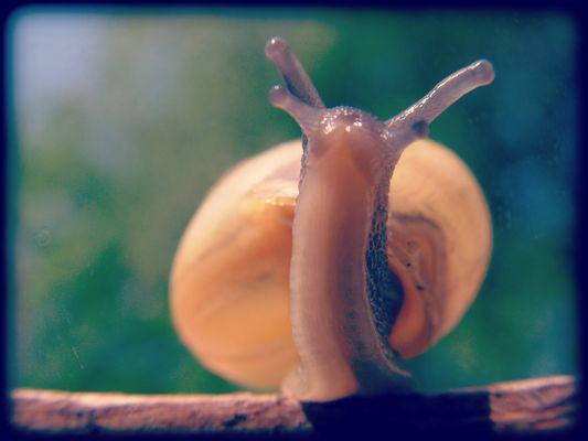 l'escargot marche droit devant lui ...