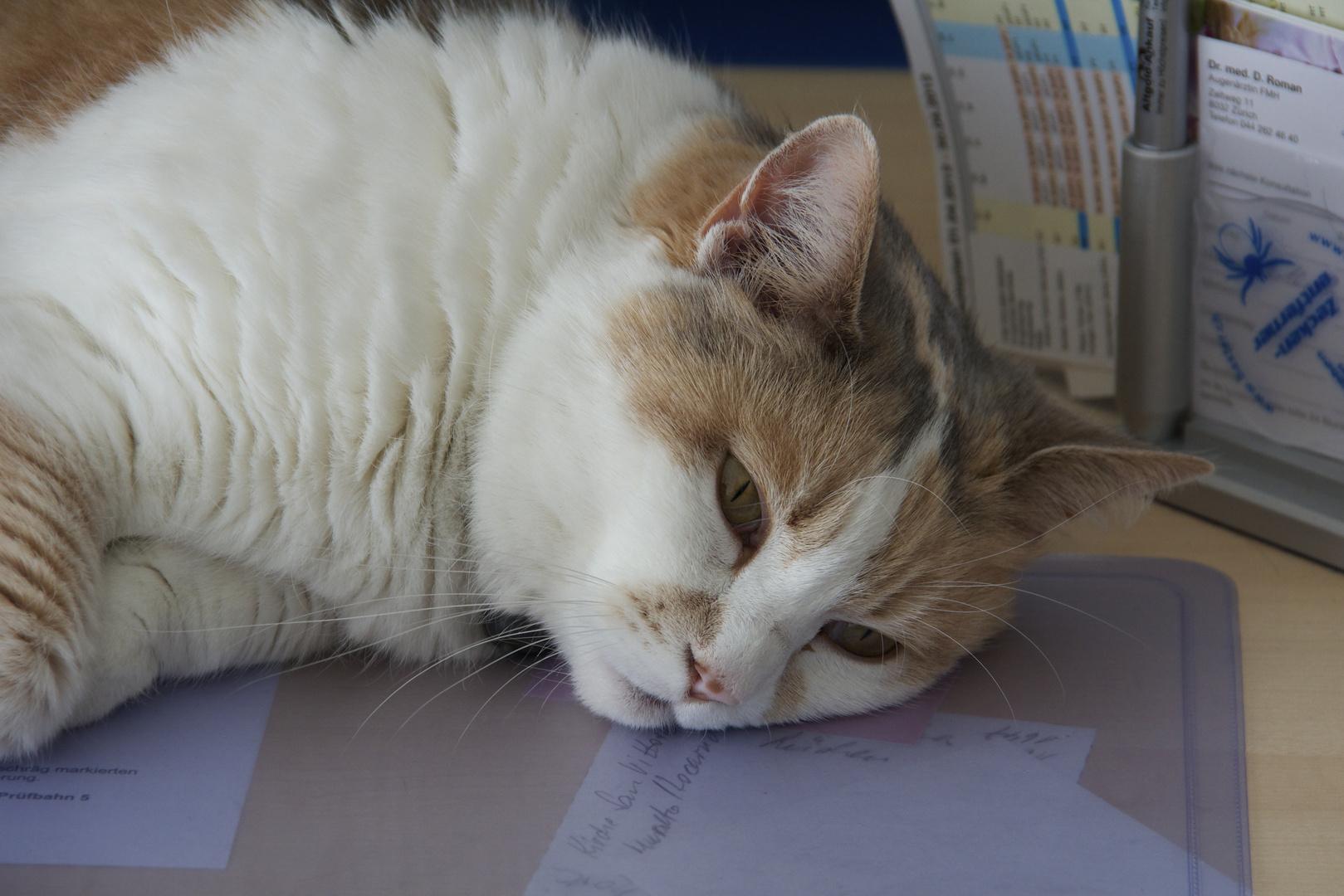 Lesen lernen oder doch lieber schlafen ?!