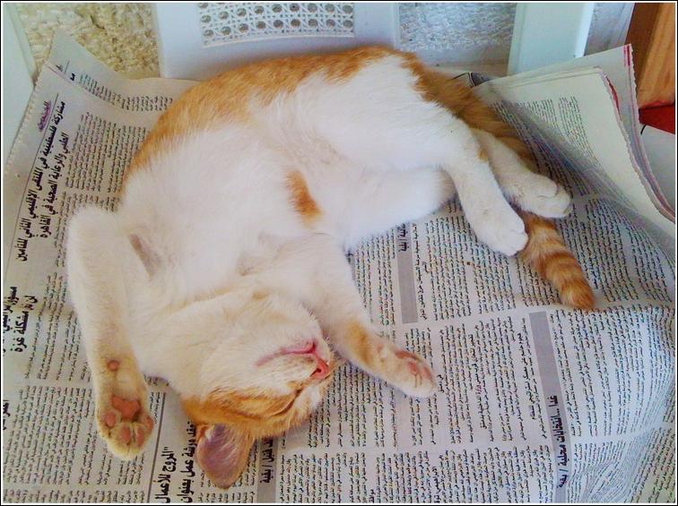 Lesen macht müde