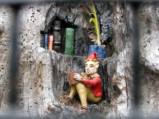 Lesender Zwerg der Elfin Oak in Kensington Gardens